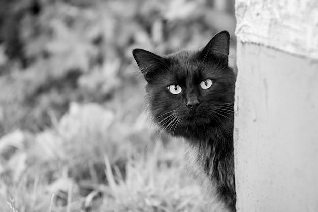 黒猫は家の角の周りから慎重に見えます