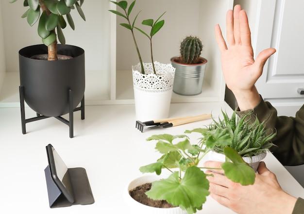 Блогер показывает поднятую руку в смартфоне и много комнатных растений в горшках.