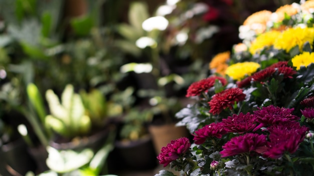 내 정원에 꽃이 피다