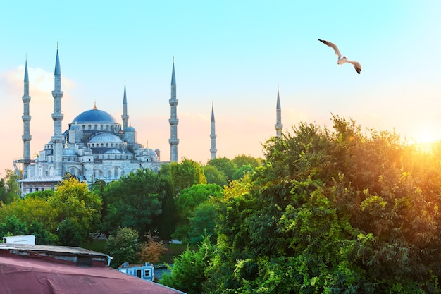 イスタンブールのブルーモスク、側面図。