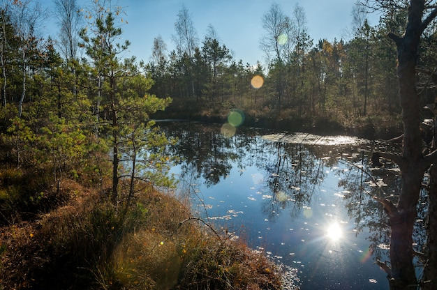 Болотистое озеро в лесу. отражение деревьев, солнечный луч в воде. солнечный осенний день. кёнас болото (cenas tyrelis), латвия.