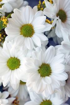 白い菊の花束。恋人へのロマンチックな贈り物。白い花chrysantemumのクローズアップビュー