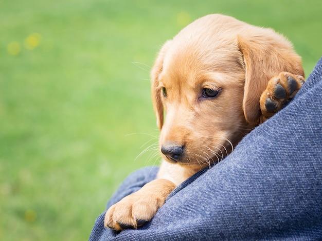 少年はコッカースパニエルの小型犬種を手に持っています。 space_をコピーします