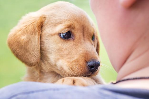 少年は自信を持って彼を見ているコッカースパニエルの小さな犬種を手に持っています_