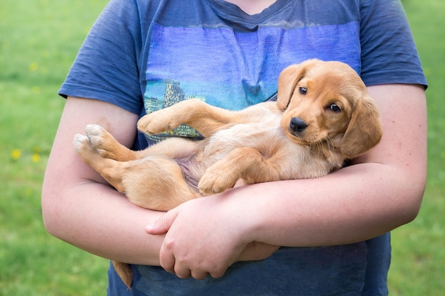少年はコッカースパニエルの小さな子犬の品種を手に持っています_