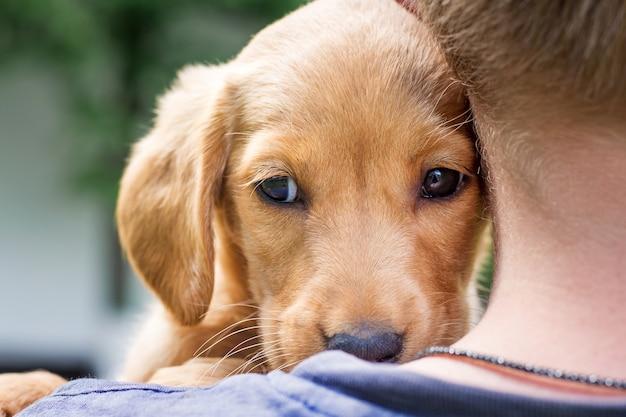 少年はコッカースパニエルの犬種の手に犬を抱き、犬を彼に押し付けます_