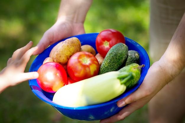 少年は夏の野菜の収穫が入ったボウルを持っています。農家と子供は菜園からトマト、きゅうり、ズッキーニを選びます