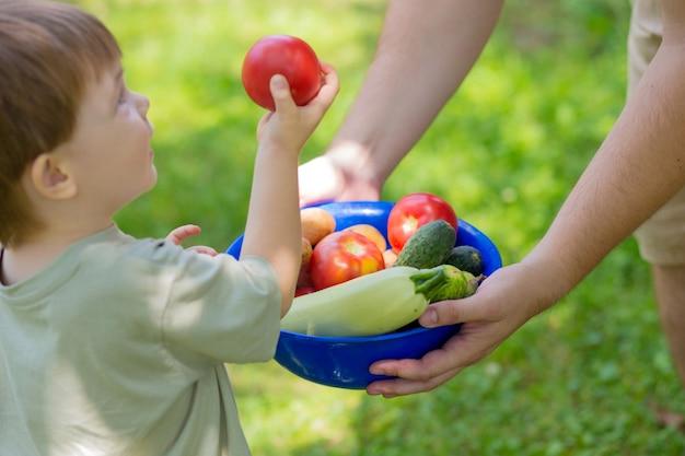 少年は野菜の夏の収穫とボウルを持っています