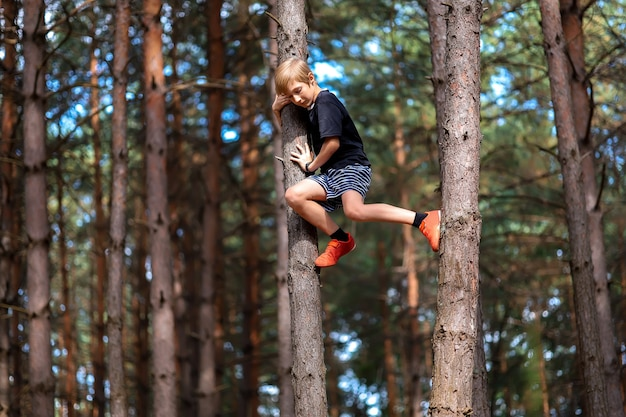 소나무숲에서 소나무에 올라갔다가 이제 나무에서 내려오고 싶은 소년