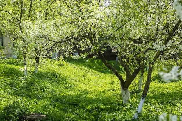 바람에 봄 날 꽃이 만발한 벚꽃 나무의 가지.