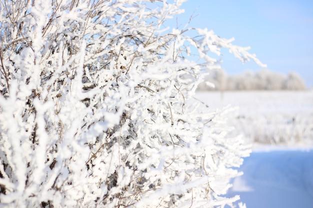맑고 맑은 날에 추위에 덤불의 가지 서리의 가지