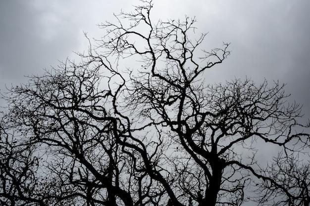 太陽からの光の反対側の木の冠の枝。
