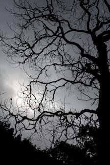 태양의 빛과 반대되는 나무의 면류관의 가지.