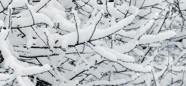 木の枝は厚い雪の層で覆われています_