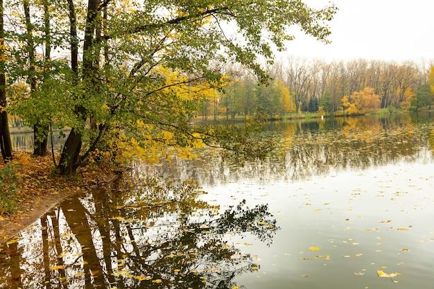 秋の枝は川を越えて曲がり、水に落ちます。風景