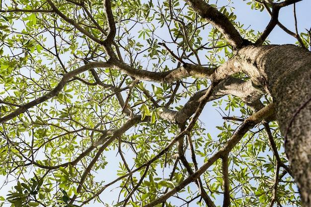 Ветки деревьев в лесу