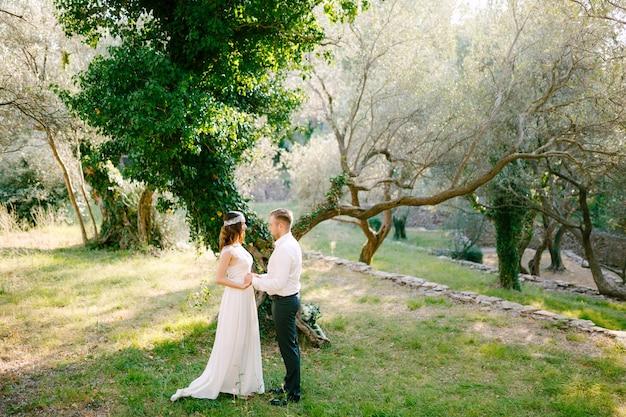 신부와 신랑은 올리브 과수원에서 담쟁이로 덮인 그림 같은 나무 근처에서 손을 잡고 있습니다.