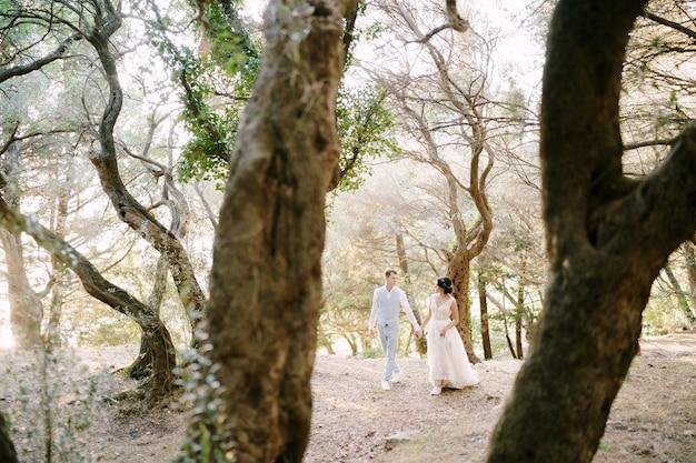 신부와 신랑은 올리브 나무 사이에서 손을 잡고 걷고 있습니다. 고품질 사진
