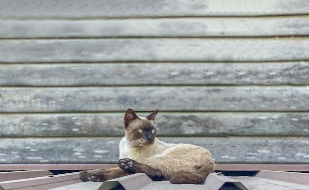 갈색 태국 고양이는 회색 나무 벽 앞 지붕에 앉아 있습니다.