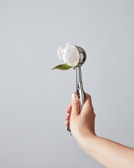 Бутон цветка белого пиона в ложке вместо мороженого в руке женщины на светло-сером фоне с местом для текста.