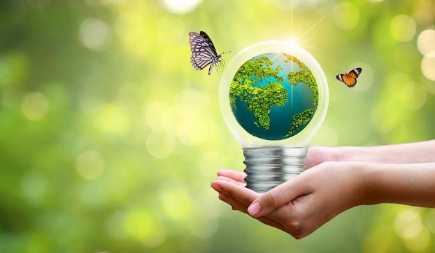 Лампочка находится на внутренней стороне леса с листьями и деревьями на свету. концепции сохранения окружающей среды и глобального потепления. растение внутри лампы над сушкой.
