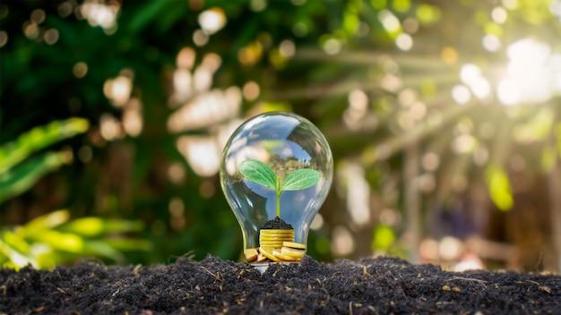 전구는 빛 아래에서 돈으로 자라는 나무, 에너지 절약 개념, 환경 보호 및 지구 온난화와 함께 땅에 있습니다.