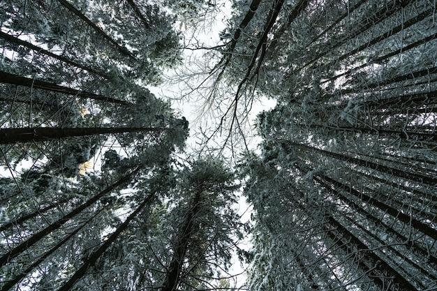 카메라는 나무의 면류관을 향해 위쪽으로 향하고 uhd 4k 실시간 비디오