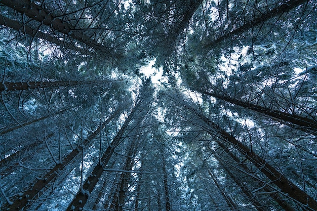 카메라는 나무의 면류관을 향해 위쪽으로 향합니다.