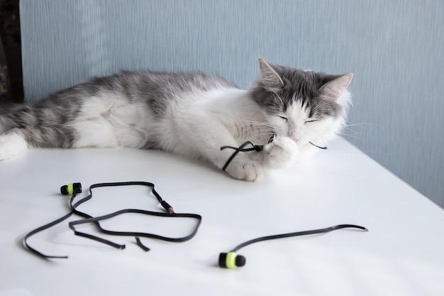 猫がヘッドホンを噛んでいて、ワイヤーを噛んでいます。ペットを悪い習慣から止める方法。
