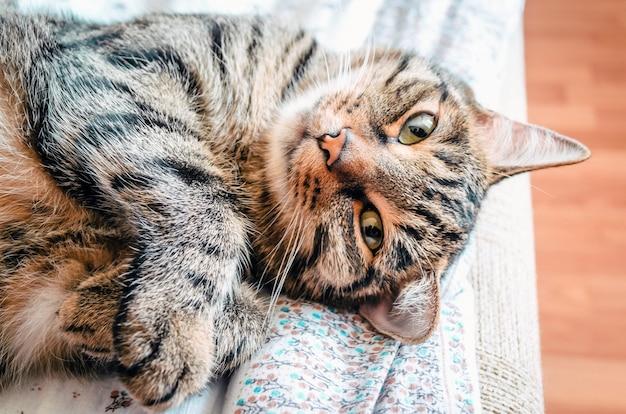 Кошка полосатого окраса лежит и спит.