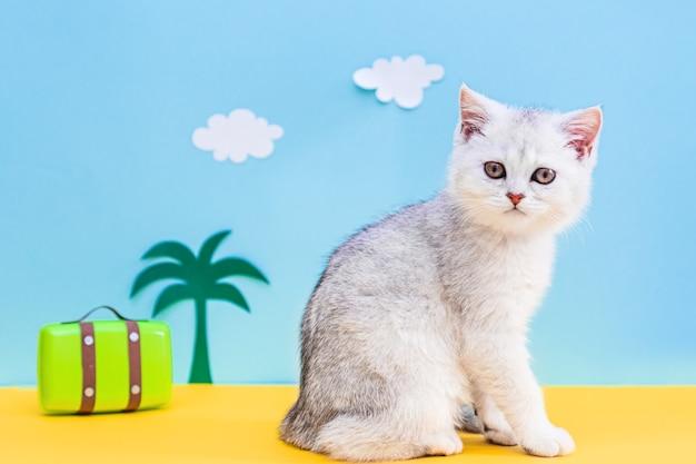 Кот путешественник. забавный белый британский котенок с облаками, пальмами и багажом. концепция путешествия.