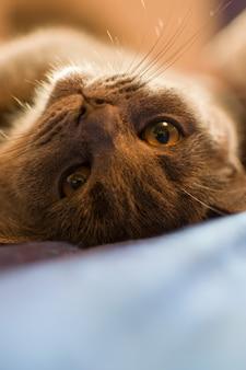 猫はベッドで日光浴をしている。
