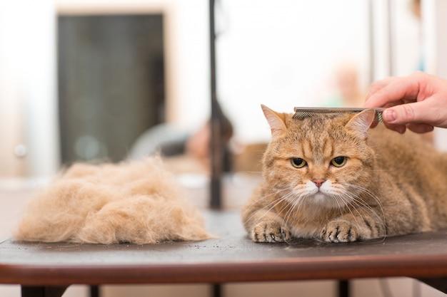 Кошку причесывают и стригут в парикмахерской для животных. уход за питомцами.