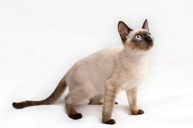 고양이는 점프를 준비하고 있습니다. 흰색 배경에 사진입니다.