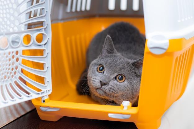 Кошка сидит в переноске животных. pet. перевозка животных. перевозка животных. безопасность домашнего животного.