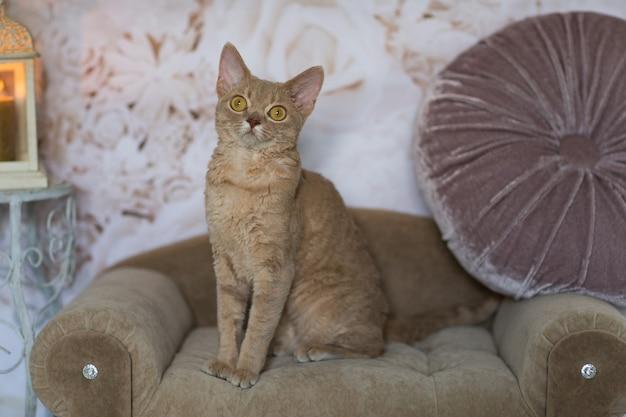 猫は、キャンドルのあるランタンの隣のソファに座っています