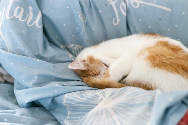 Кот спит на кровати. на синей кровати спит маленький белый кот с красными пятнами. рыжий кот с белыми пятнами.