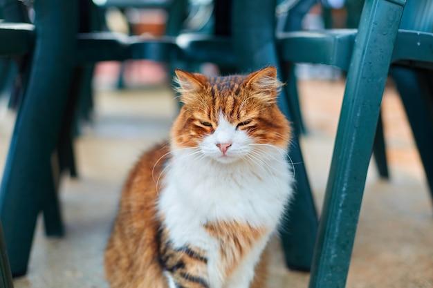 Кошка ждет еды, сидя под столом на летней террасе в кафе.