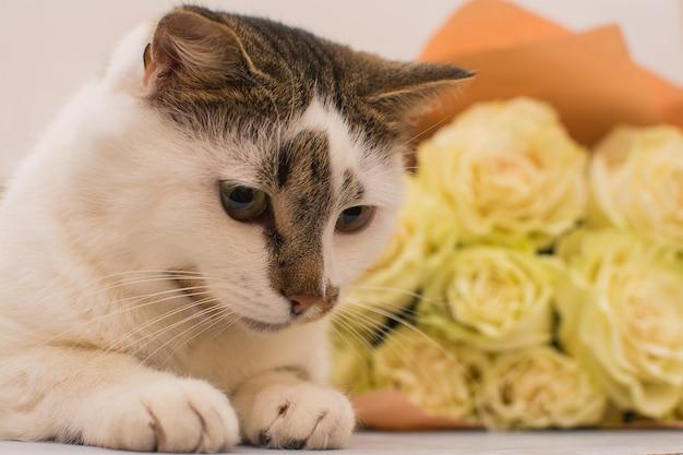猫は明るいバラの花束の近くに横たわっています。