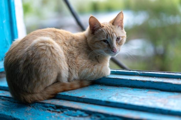 Кот лежит возле открытого окна