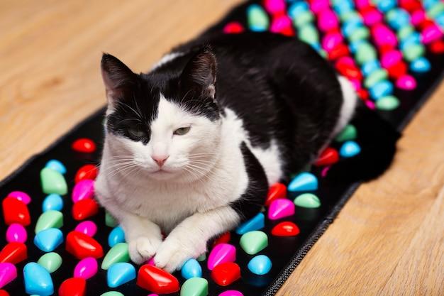 Кот лежит на массажном коврике для ног, имитирующем дорогу из камней, мануальная терапия для профилактики болезней здоровья.