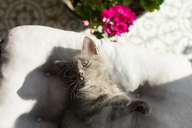 猫は日光の下で伸びる枕の上に横たわっています