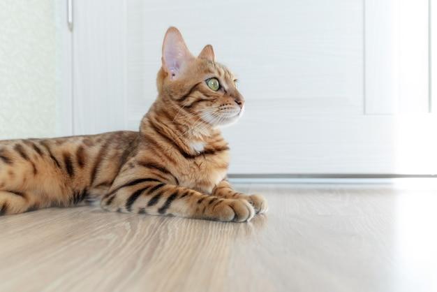 고양이는 부드러운 햇살이 비추는 문에 팔꿈치를 놓고 바닥에 눕습니다.