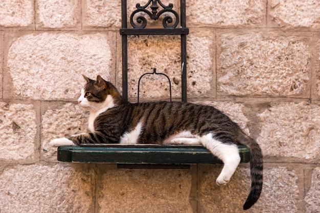 Кот лежит на улице на специальной подставке, висящей на стене.