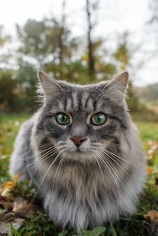 Кот удивленно смотрит в камеру большими глазами.