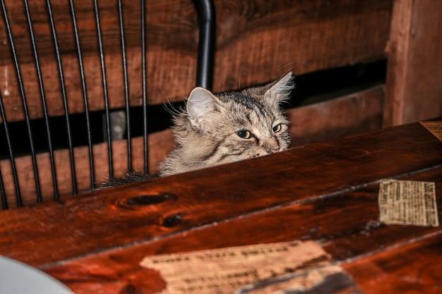 Кот на стуле, щурясь на стол