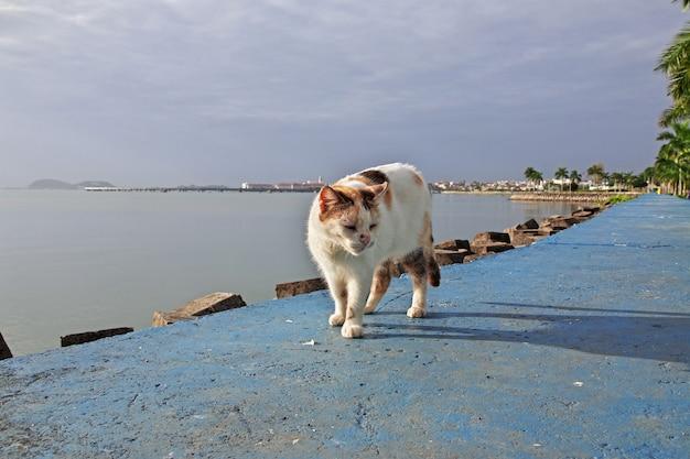 Кошка на набережной города панама, центральная америка