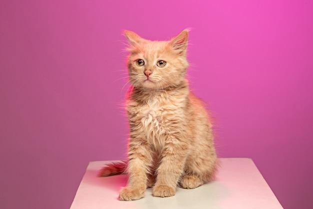 흰색 바탕에 고양이