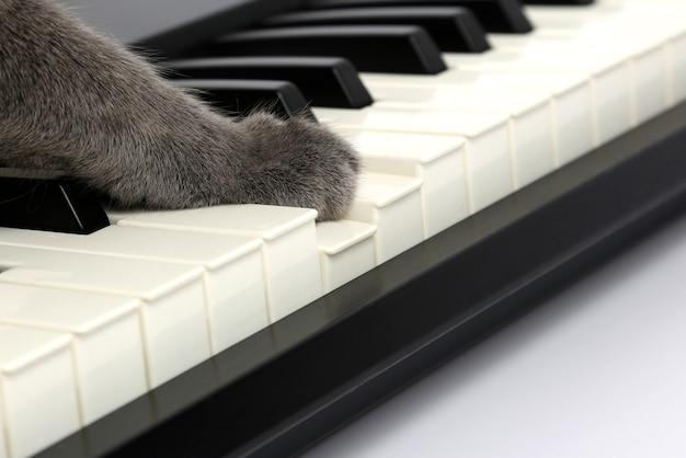 고양이 발이 피아노 건반에 닿습니다.