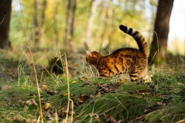 고양이는 위험으로부터 자신을 보호하기 위해 공격성을 보여줍니다.